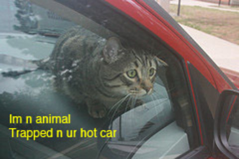 Cat_in_hot_car