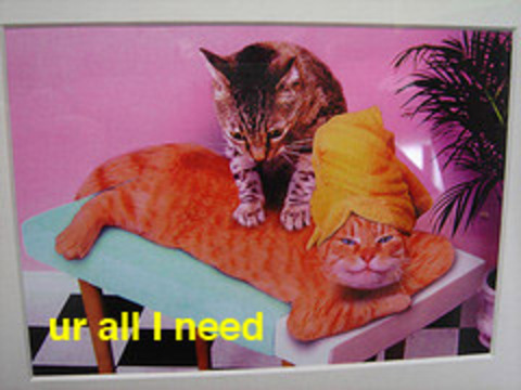 Cat_ur_all_i_need_3