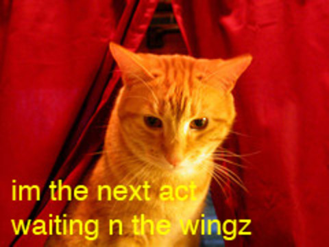 Cat_waiting_in_wings